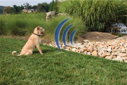 Vallas invisibles para perros blog collar adiestramiento for Vallas para perros en casa