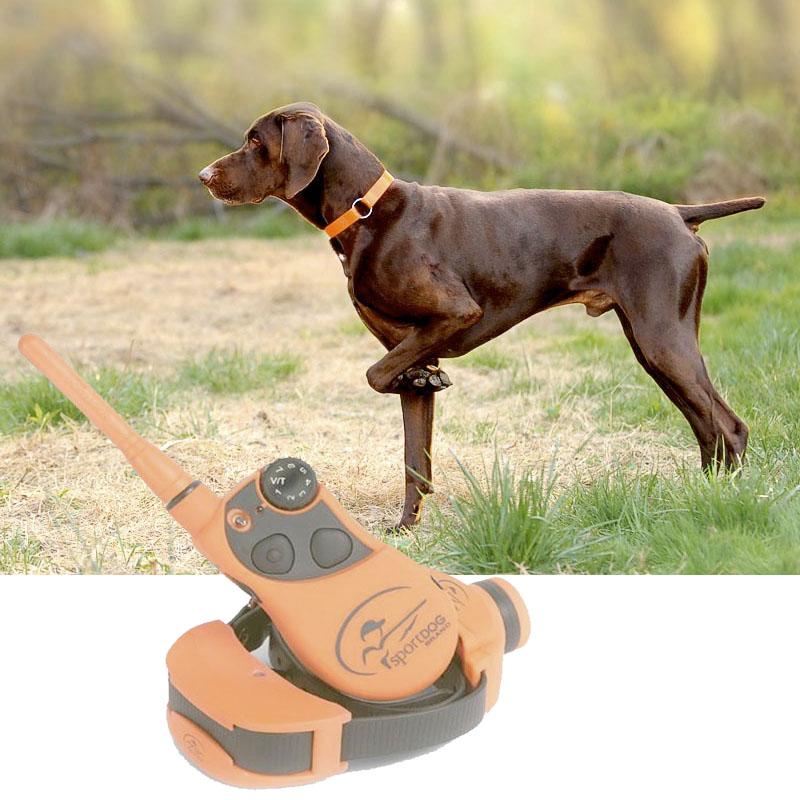 collar adiestramiento perros de caza