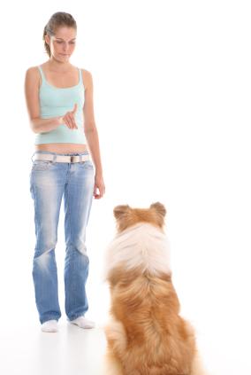 Corrección perro con voz