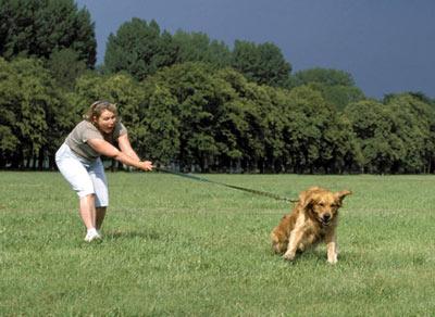 adiestramiento para que el perro no tire de la correa