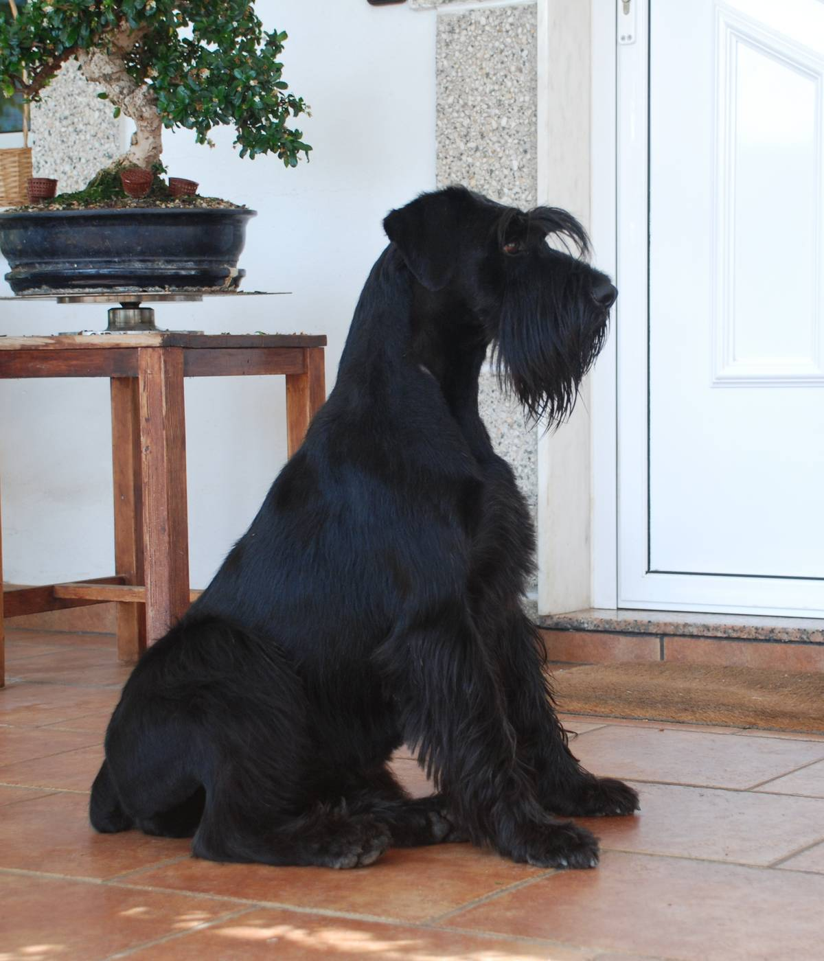 adiestrar a mi perro para que espere en la puerta