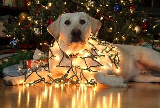 perro en arbol de navidad