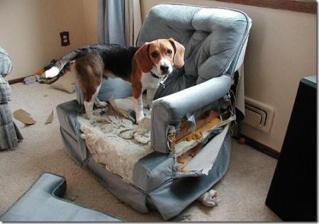 Perro destroza la casa
