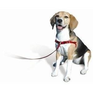 cachorro con arnes y correa suelta
