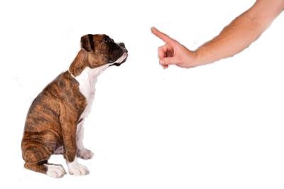 collar adiestramiento cachorros