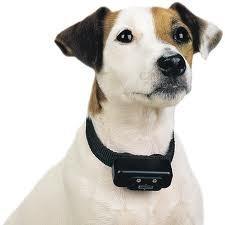 Collar adiestramiento ajustado al cuello