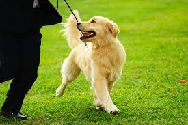 girar sobre el perro
