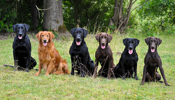 Perros para la prueba de dogsafe koolkani