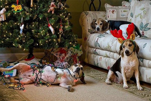 Arbol navidad perros