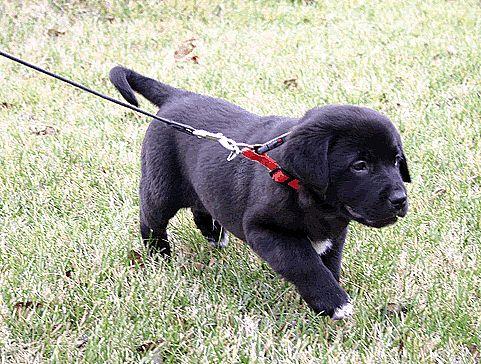 pasear cachorros