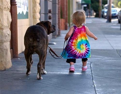 perro paseando correctamente