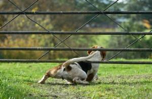 perro se escapa de casa