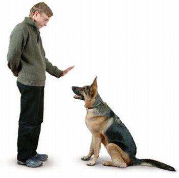 premio perro sentado