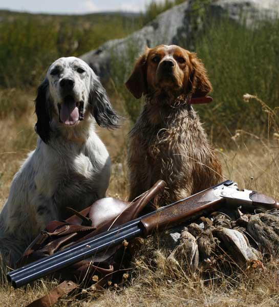 dos perros cazando