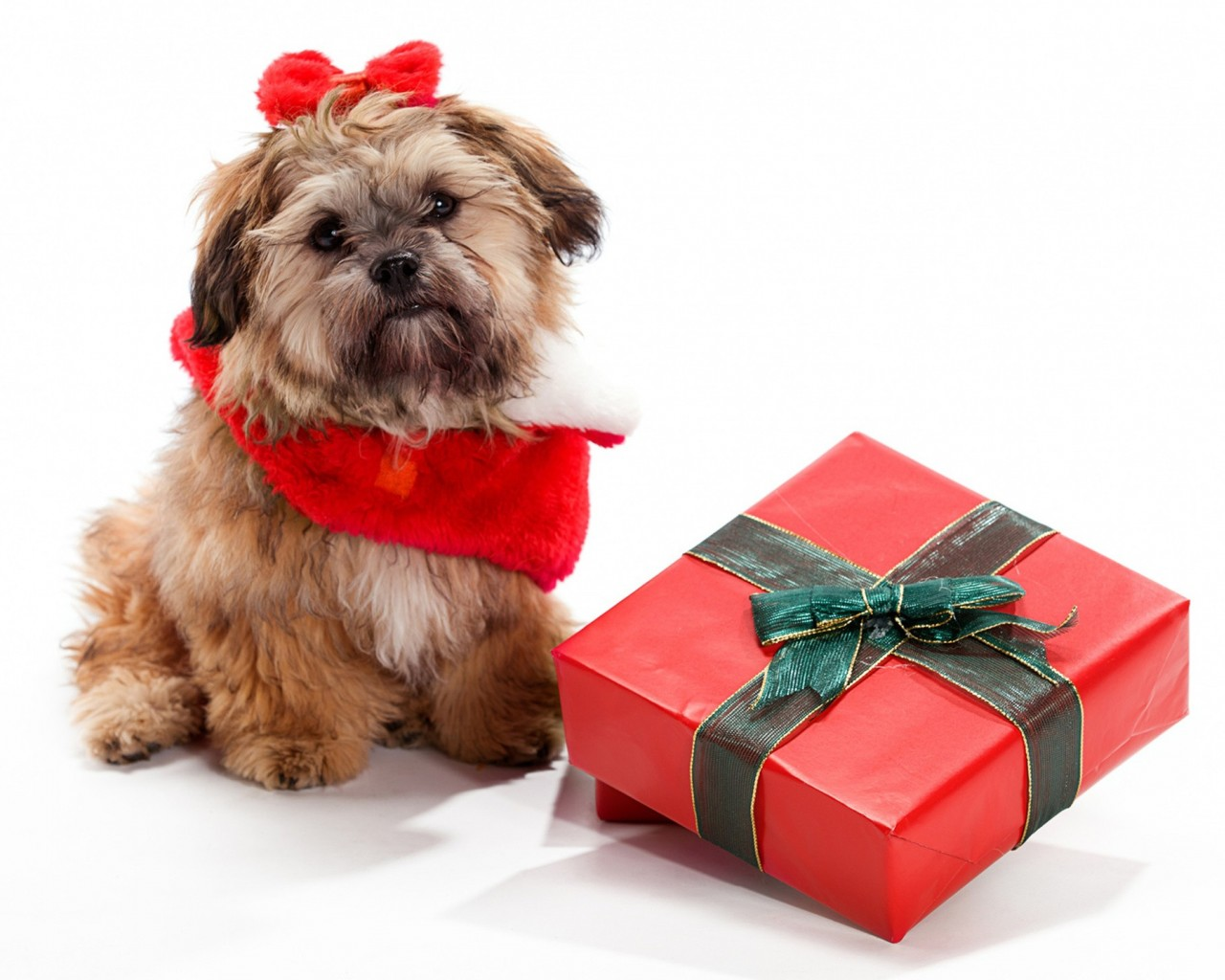 feliz navidad perros